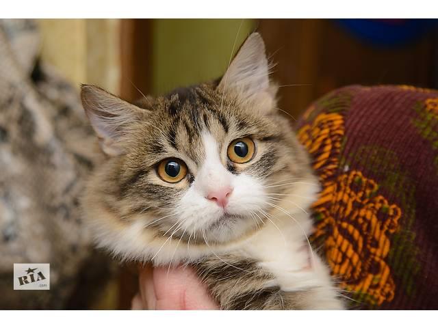 Ищет дом котенок Алиса- объявление о продаже  в Донецке