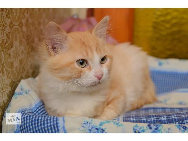 Ищет дом котенок Рыжик - объявление о продаже  в Донецке