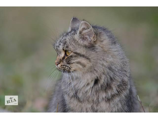 бу Ищет дом молодая кошечка Маня  в Донецке