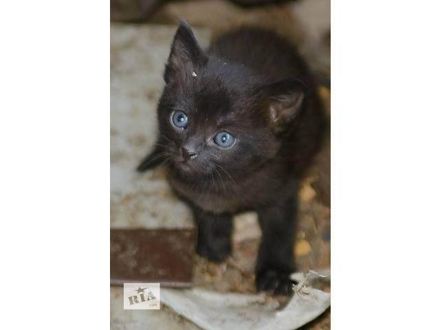 продам Ищут дом котята, черные девочки бу в Донецке