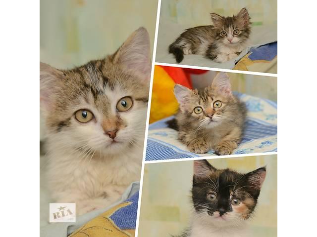 бу Ищут дом котята  в Донецке