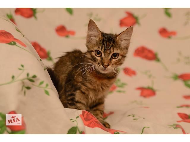 бу Ищут дом замечательные котята  в Донецке