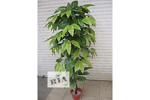 Нові Декоративно-листяні рослини