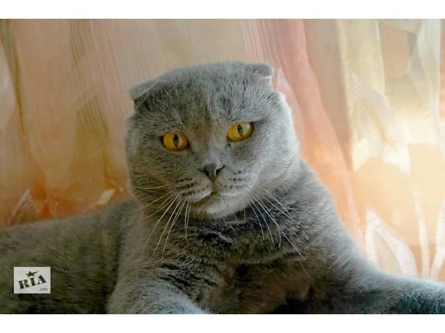 купить бу Замечательный шотландський вислоухий кот Пиксель ищет дом в Киеве