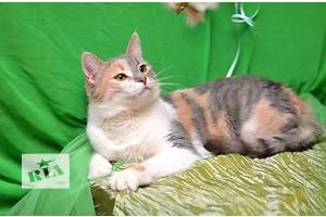 Зеленоглазая красавица с кисточками на ушках, плюшевая мурчалка Василиска