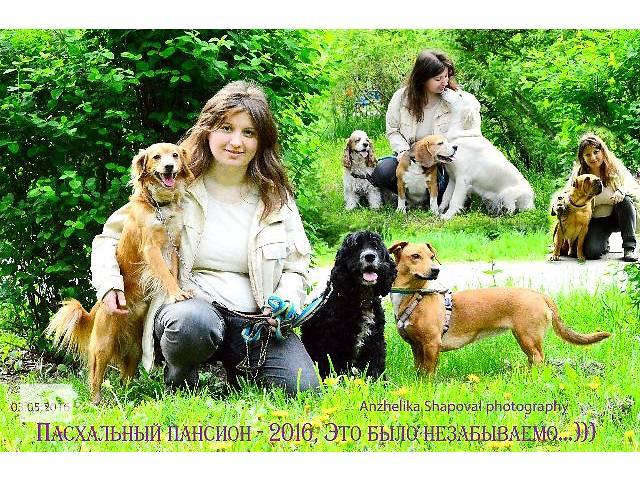 Зоогостиница, пансион для собак, передержка, отель для собак, гостиница для собак, для животных.- объявление о продаже  в Киеве