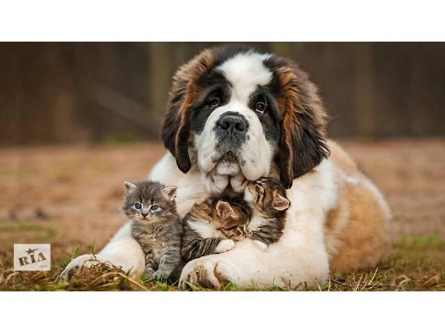 продам Зоогистиница для животных ноев ковчег бу в Запорожье