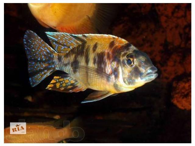 Аквариумные рыбки  Интернетмагазин АкваПитер