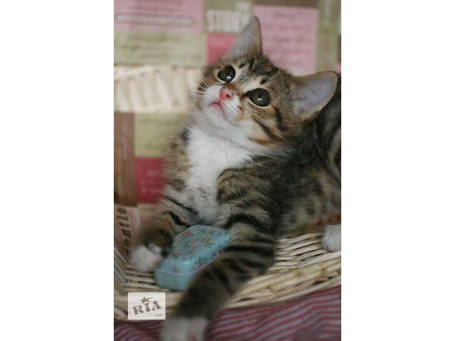 Ласковый котенок Захари, 2,5 месяца