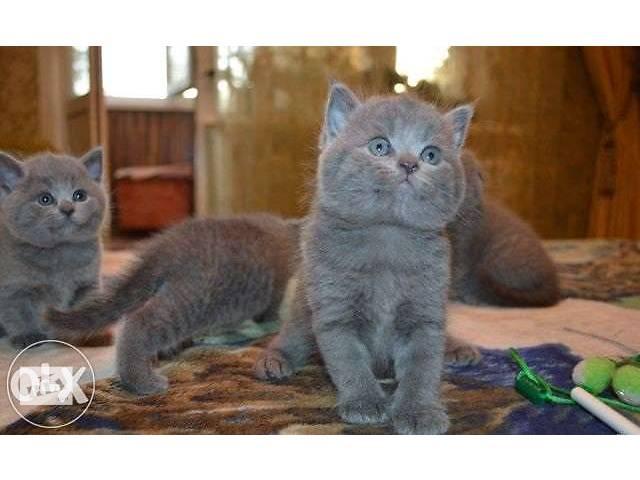Милые и нежные котята
