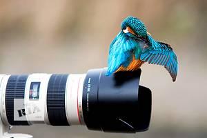 Фотоискусство