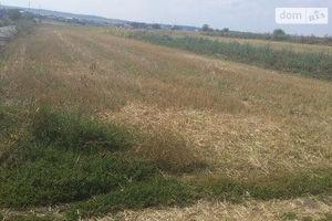 Куплю землю сельскохозяйственного назначения на Березовице без посредников