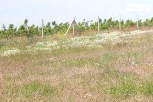 Продается земельный участок 10 соток в Винницкой области