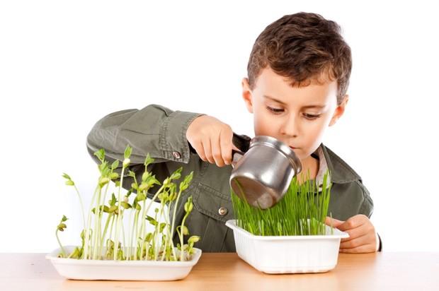 10 полезных растений, которые обеспечат ваш дом кислородом