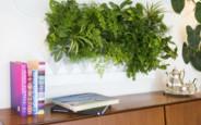 Робимо квартиру більш зеленою: які домашні рослини підібрати напередодні весни