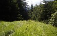 Самозахоплення земельної ділянки: чим загрожує і як узаконити