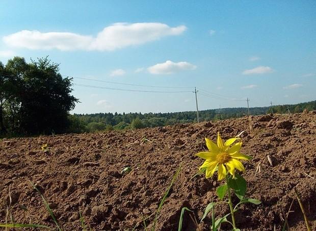 Как фермеры арендуют землю в Украине
