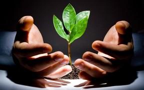 Как повысить плодородность плохой почвы на своем участке