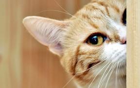 Коты, летучие мыши и птицы – чего ждать от пятницы, 13-го