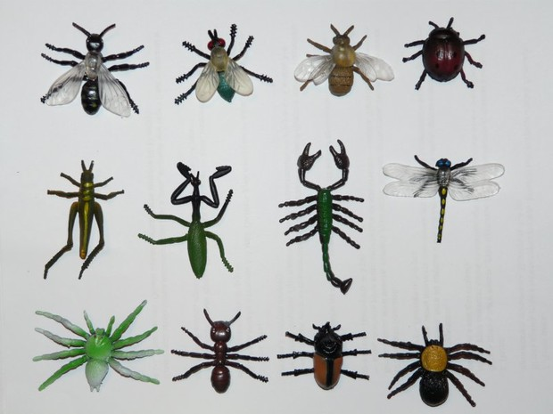 Откуда появляются насекомые в квартире и как с ними бороться