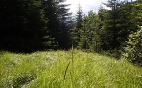 Самозахват земельного участка: чем грозит и как узаконить