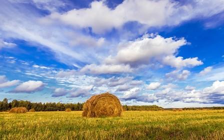 Сколько земельных участков переходят государству ежегодно