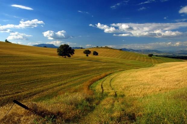 Суд вернет Государству 24 га земли в Киевской области