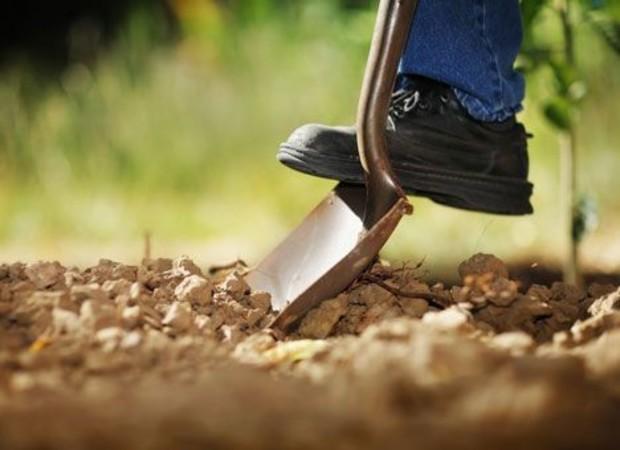У крымчан будут отбирать необрабатываемые земли с/х назначения