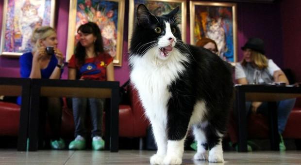В Лондоне открывается первое кафе с кошками