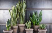 11 растений, которые наполнят ваш дом кислородом