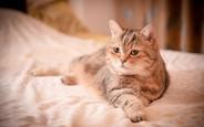 4 совета арендатору с животным