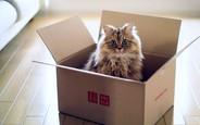 Как организовать переезд без стресса