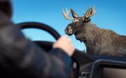 Украинские дороги оборудуют туннелями для диких животных