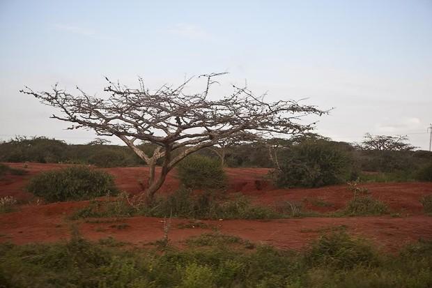 Американские фермеры скупают земли в Африке
