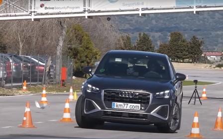 Audi Q2 пошел на лося. Кто кого? ВИДЕО