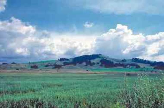 Через 2 года Азаров обещает полноценный рынок земли