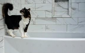 Эргономика ванной комнаты: 4 правила оформления