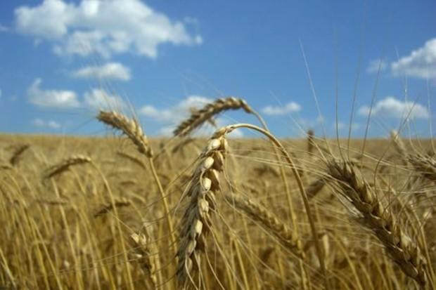 Фермерским хозяйствам обещают «зеленую дорогу» на покупку земли