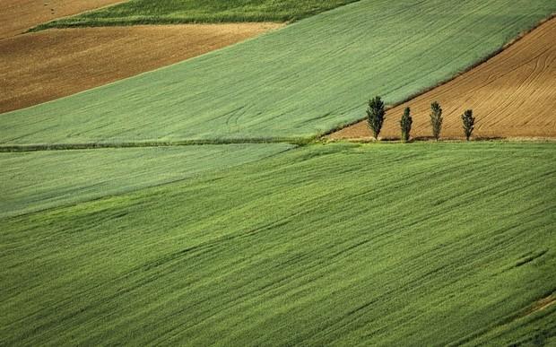 Где в Украине самая дорогая земля