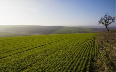 Кабмин обновил типовой договор аренды земли
