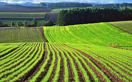 Кабмін передбачив кошти на здешевлення кредитів на купівлю землі