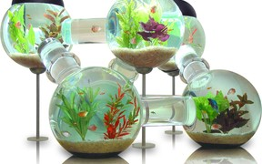 Как купить аквариум через интернет, используя доску объявлений