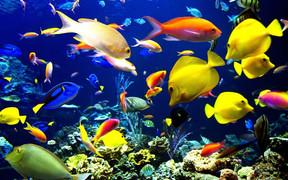 Как купить рыбки для аквариума с помощью доски объявлений