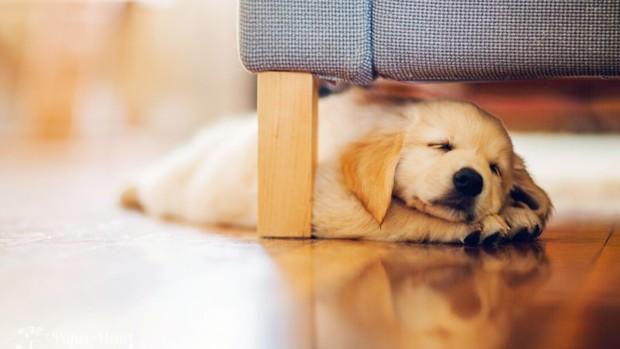 Какую собаку купить в квартиру
