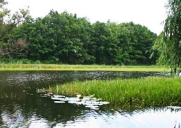 Хозсуд запретил сокращать территорию заказника «Жуков остров»
