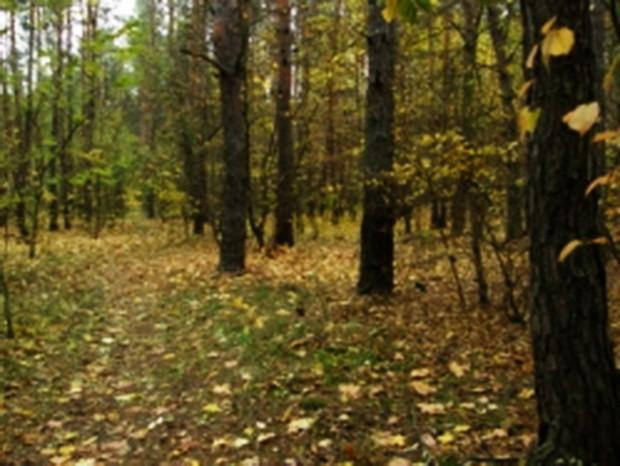 Киевские леса планируют обустроить в пикник-зоны