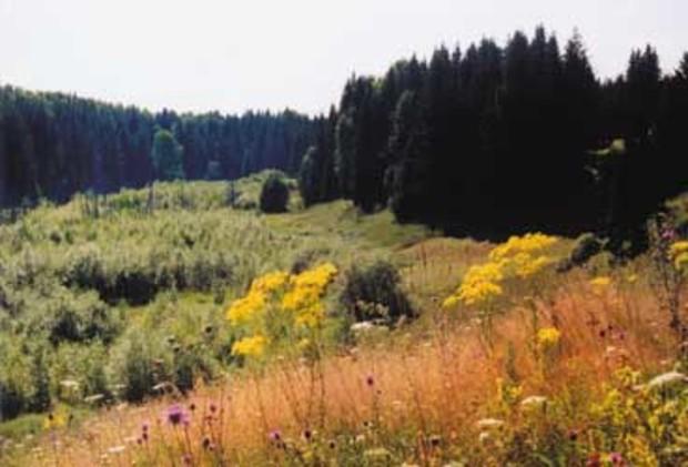 Киевские власти готовят на продажу 18 земучастков