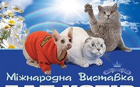 Международный Бал Кошек в Киеве!