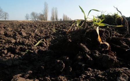 На Херсонщине земля обошлась аграриям в 5 млн грн