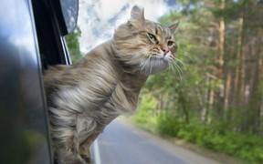 На кошачьих правах: в отпуск — с питомцем